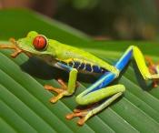 Frog-643480_1280